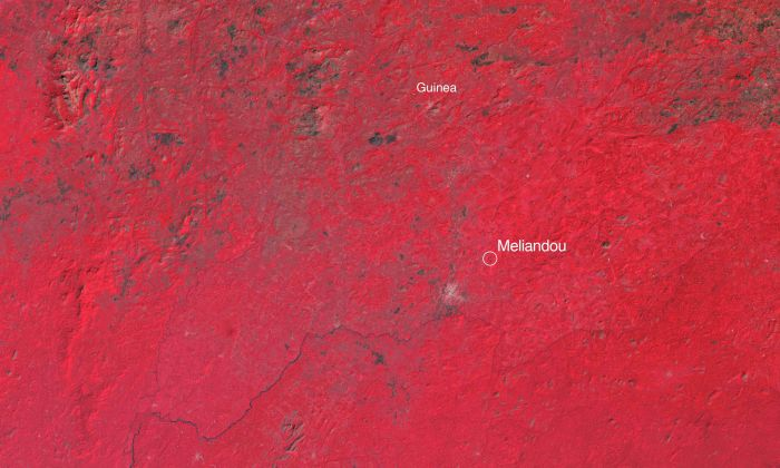 The Western Guinea region where the 2014 Ebola epidemic began. These infrared satellite images (taken in 1985, 2002, and 2016) show a clear depletion of forest cover (red) and an expansion of towns and villages (light grey). Data: Landsat/USGS.