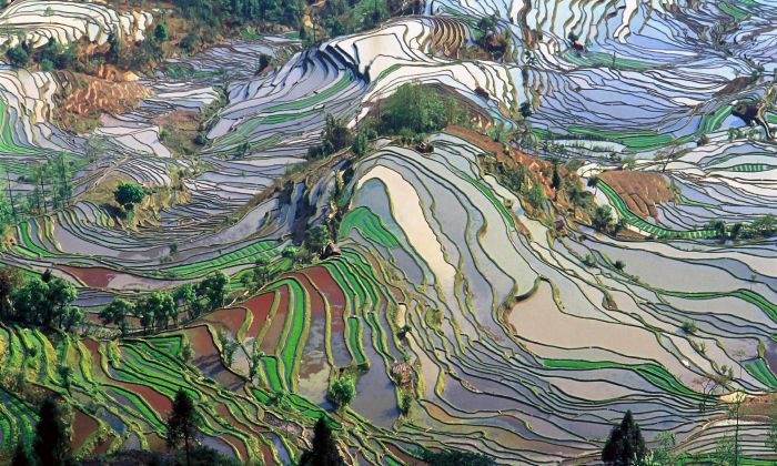 Terrace field, Yunnan, China. Beeld: wikimedia