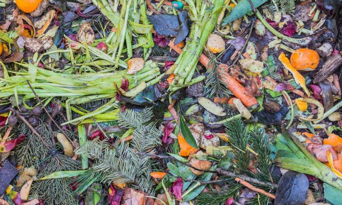 Urban compost, sustaining a wildly varied multispecies community