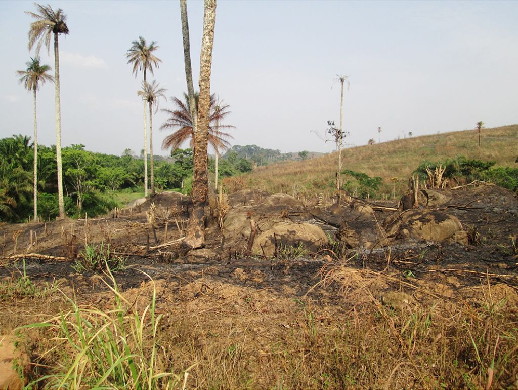 Deforestation in the area known as Guinea Forest Region, where the 2014 Ebola outbreak originated. Photo: Daniel G. Bausch (2014).